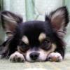 夏の室内犬の過ごし方 実は冷房が嫌い